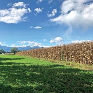 Confagricoltura Cuneo: Isabella Moschetti rivendica l'importanza del concedere in affitto i propri terreni