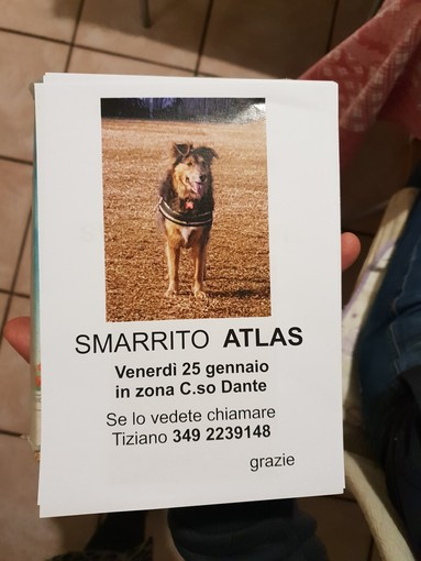 A Cuneo si cerca Atlas, smarrito nei giorni scorsi in corso Dante