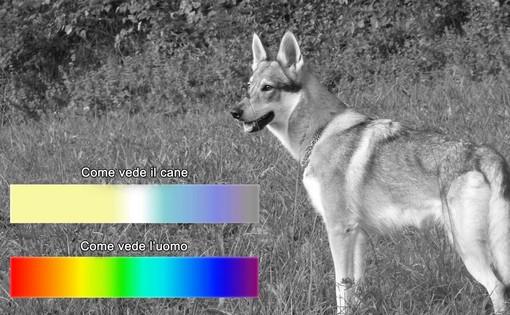 Come vedono i nostri cani?