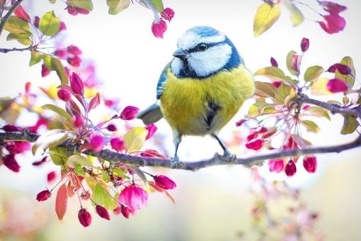 #IoRestoaCasa: fotografare da casa gli uccelli liberi in natura