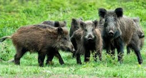 Nuova Legge sulla caccia, cosa dicono le organizzazioni agricole cuneesi