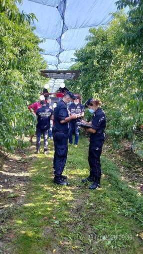 Saluzzo, controlli dei carabinieri nelle imprese agricole: sanzioni per quasi 60mila euro