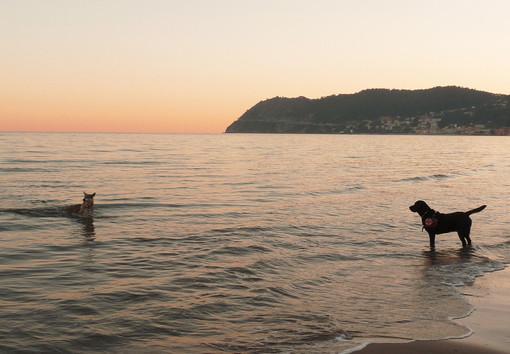 S.O.S. Bagnino: per molti cani in estate è tempo di lavoro!
