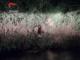 Il tubo, nascosto nella vegetazione