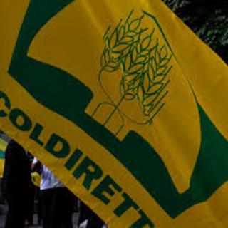 Covid, Coldiretti: quarantena breve salva lavoratori e imprese