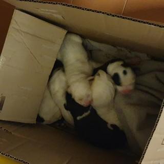 Trovati il giorno di Natale, a Cuneo, sette cuccioli di pochi giorni abbandonati in uno scatolone