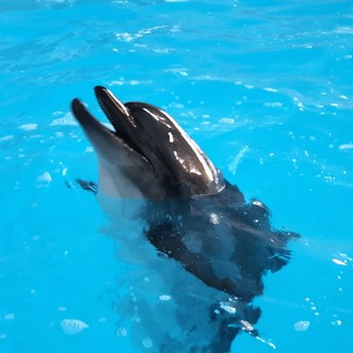 Il veterinario amico dei ricci nel team internazionale che ha salvato la delfina Kasya [FOTO]