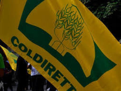 """Recovery Fund, Coldiretti Cuneo: """"Sovranità alimentare al primo posto"""""""