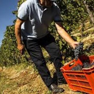 """Decreto rilancio, Coldiretti Cuneo: """"Bene il taglio del costo del lavoro"""""""