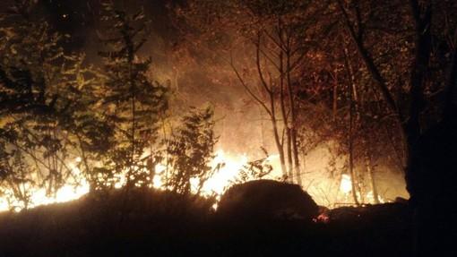 """""""Gli incendi di questi giorni stanno mandando in fumo l'immenso tesoro della biodiversità"""""""