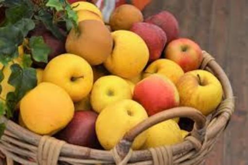 Covid, Coldiretti Cuneo: export di frutta cuneese a rischio in Gran Bretagna con blocco trasporti
