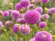 Le piante e i fiori da coltivare in casa