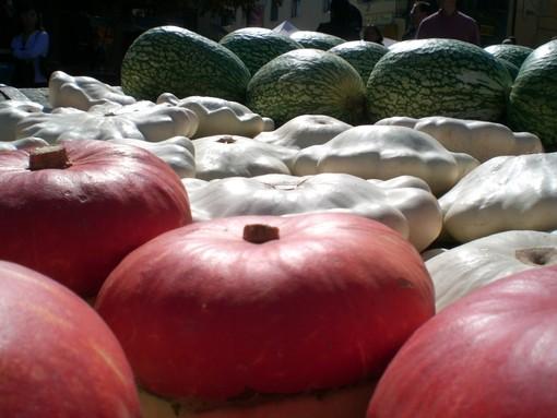 A Piozzo torna la Fiera della Zucca: in mostra 550 varietà provenienti da tutto il mondo
