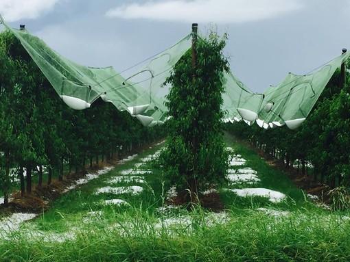 Effetto serra e cambiamenti climatici: l'agricoltura puo' contribuire a invertire la rotta