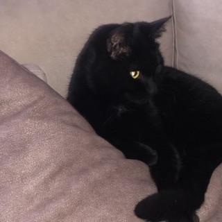 Trovata gatta nera a Manta in via Galimberti, si cerca proprietario