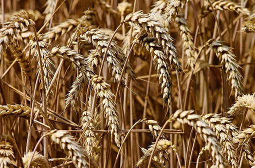 """Agricoltura, Cia Cuneo chiede """"nuove strategie per l'assunzione di manodopera"""""""