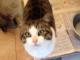 Auguri a tutti i gatti: oggi è la loro festa... lo sapevate?