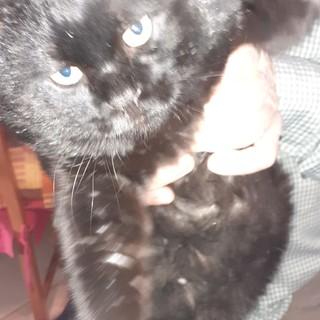 Max, il gatto che ieri si era smarrito a Fossano, è stato ritrovato