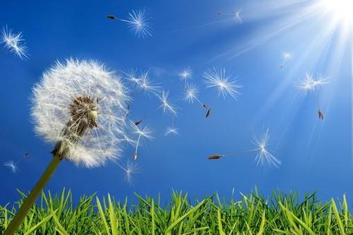 Caldo e bel tempo in provincia di Cuneo: previsto un netto aumento dei pollini allergenici
