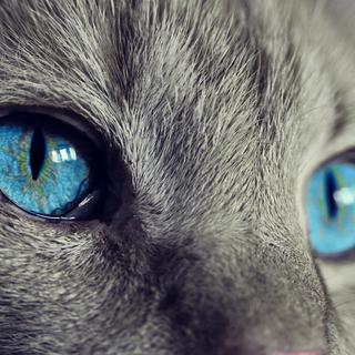 Due gatti salvati dai vigili del fuoco ad Alba e Cuneo nella notte. Immagine di repertorio - pixabay