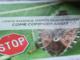 """Moria del kiwi, cimice asiatica e """"Popilla Japonica"""": all'Agrion si fa il punto su tre emergenze fitosanitarie piemontesi (VIDEO)"""