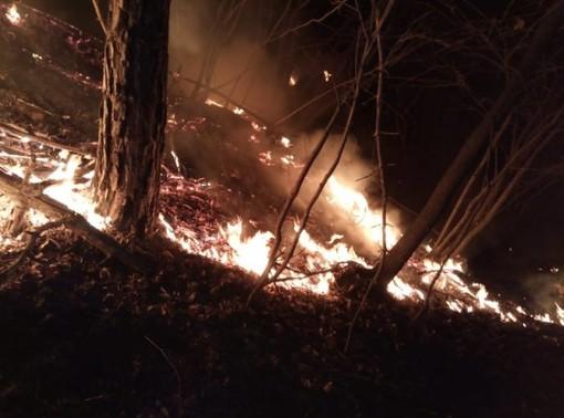 Principio di incendio boschivo a Robilante in zona Malandrè