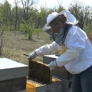 Lidia Agnello, presidente Aspromiele, al lavoro con le api