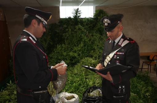 Fermati mentre esiccavano 55kg di marijuana a San Benedetto Belbo, due minorenni e un 40enne in manette