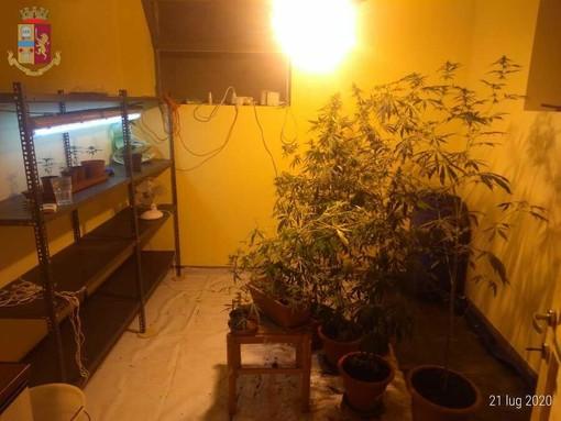 """Trinità, coltivava marijuana in una """"serra indoor"""": 45enne arrestato dalla Polizia"""