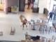 Scompiglio al Miac di Cuneo per una mucca al bar: per fortuna, solo tanta paura (VIDEO)