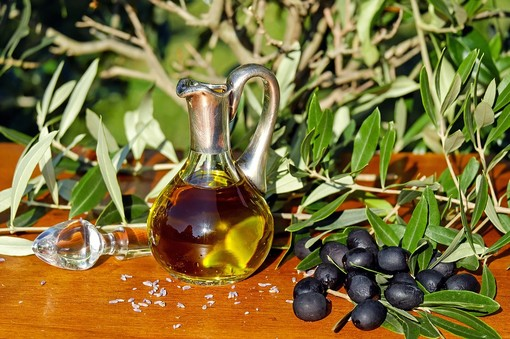 Produzione di olio extra vergine: il nuovo frantoio OlioCru tra i più moderni d'Europa