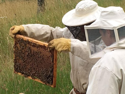 Ormea, la scuola forestale ha prodotto 50 chili di miele