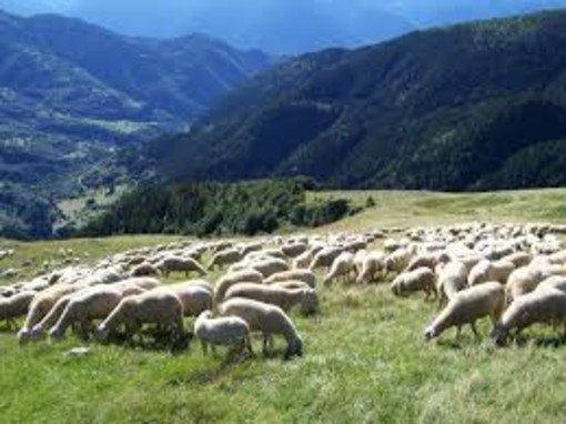 Alpeggi, il Tar del Lazio ripristina il divieto al pascolamento da parte di terzi