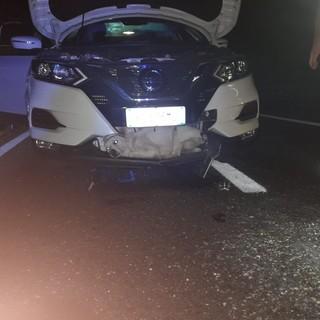 Il cane si è miracolosamente salvato perché nell'impatto ha sfondato la griglia di aerazione dell'auto - Foto Facebook Ambulanze Veterinarie Italia