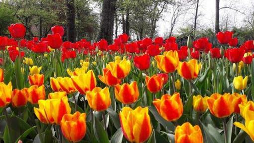 Messer Tulipano, a Pralormo
