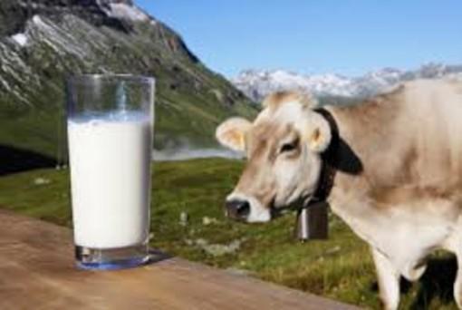 Accesso ai dati sulle importazioni di latte: il senatore Taricco chiede l'estensione della piena trasparenza
