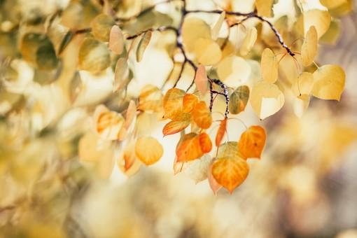 Week end di fine estate con tanti eventi nella Provincia Granda con i primi sapori d'autunno
