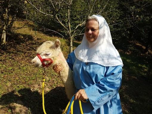 L'alpaca Joy è grave ma ancora vivo: se supererà la notte verrà operato alla clinica veterinaria di Grugliasco