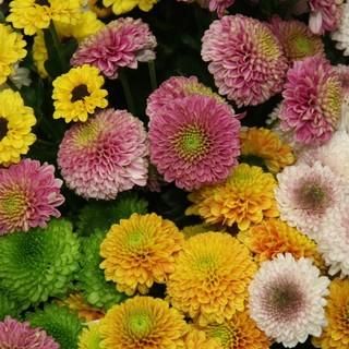 Nuova stretta anti Covid, ma è salva la vendita di piante e fiori nei centri commerciali