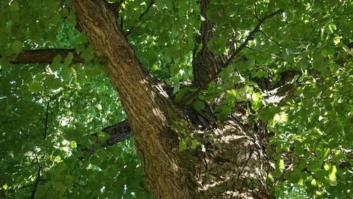 Cresce il verde pubblico a Fossano: 200 nuovi alberi in diverse zone della città