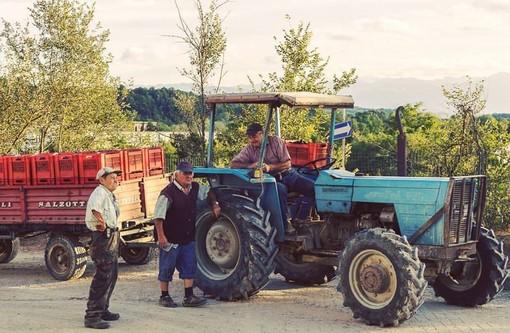La Cantina di Clavesana chiude la vendemmia: sfiorati i 25mila quintali di uva da 200 conferitori
