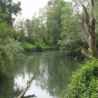 Biodiversità, Piemonte indietro tutta: le associazioni scrivono alla Regione